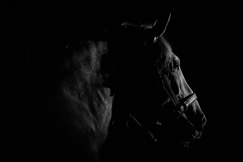 equus 14