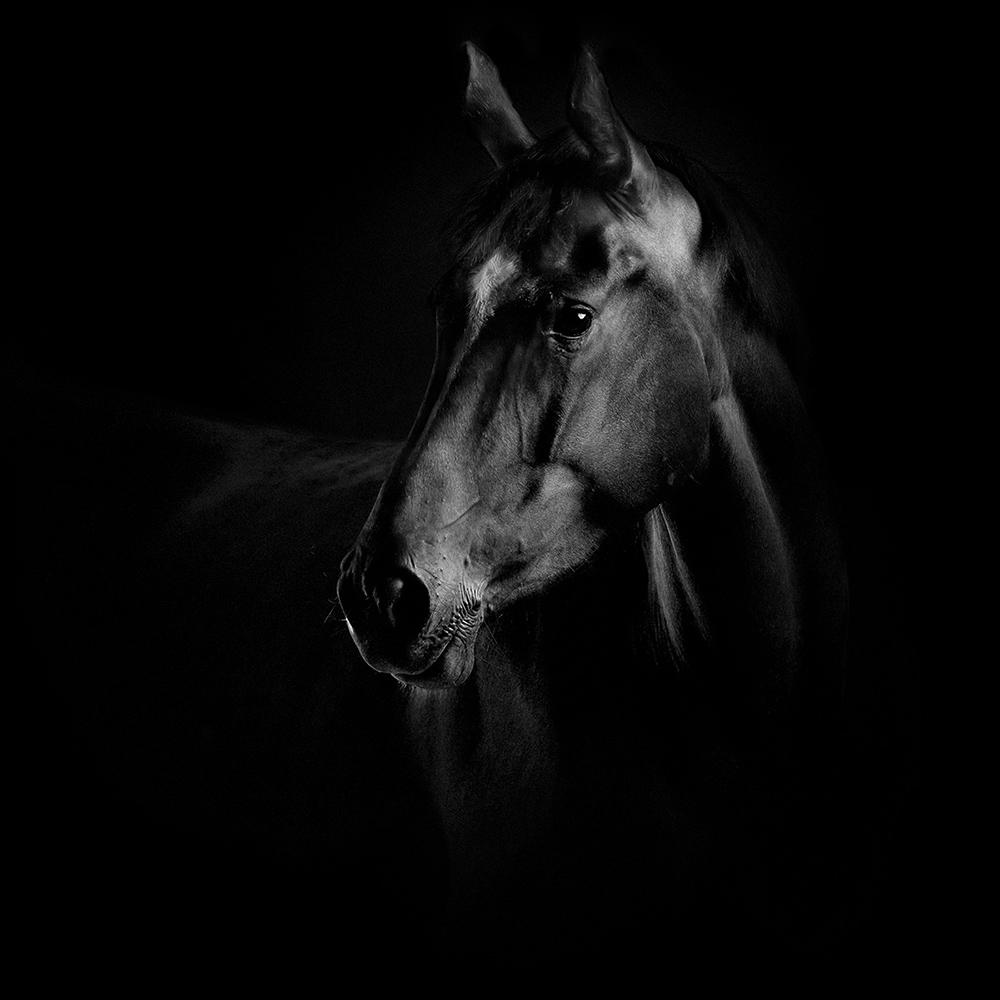 equus 15
