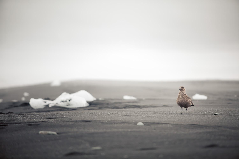 islande-nicolas-auproux-08